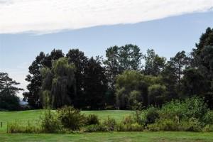 Surrey-Golf-Club-(42)