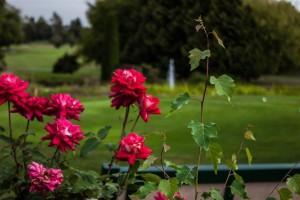 Surrey-Golf-Club-(6)