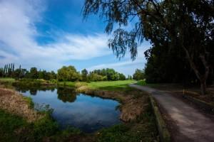 Surrey-Golf-Club-(20)